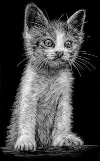 [Katze]